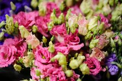 Background of a amazingly beautiful pink flowers Royalty Free Stock Images