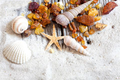 Background of amber and seashells Stock Photos
