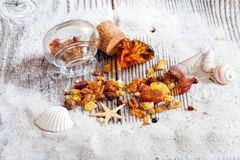 Background of amber and seashells Stock Photography
