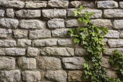 Background - Ancient Stone Wall - Ivy Stock Photography