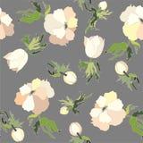 Background. Anemones. Stock Image
