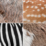 Background animal fur Stock Image