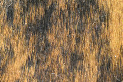 Background of animal skin... Background of animal skin.. black and light brown Royalty Free Stock Photos