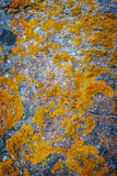 Background anophyte on stone Royalty Free Stock Images