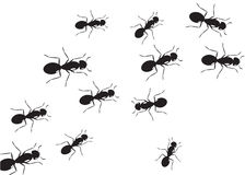 Background ant. Swarm ants black and white color Stock Photos