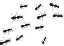 Background ant. Stock Photos