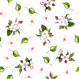 Background with apple flowers Stock Photography