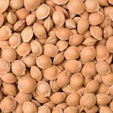 Apricot Seeds Stock Photo