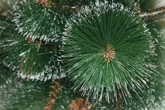 Background of artificial needles. Background of artificial pine needles closeup Royalty Free Stock Images
