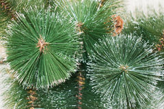 Background of artificial needles. Background of artificial pine needles closeup Royalty Free Stock Photos