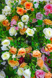 Background of artificial roses Royalty Free Stock Images