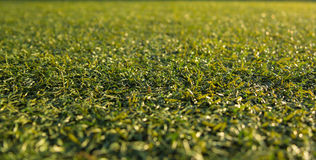Background artificial turf green grass Royalty Free Stock Photo