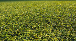 Background artificial turf green grass Royalty Free Stock Photography