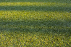 Background artificial turf green grass Stock Photos