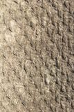 Background asbestos. Photo of an abstract texture Stock Image
