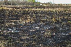 Background from the ashes of the burnt grass. Plant ash on the field after the fire burned. Background from the ashes of the burnt grass. Plant ash on the field Royalty Free Stock Image