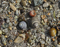 The background with assorted shells and stones at sea shore Royalty Free Stock Photos