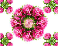 Background from Asters Royalty Free Stock Photography