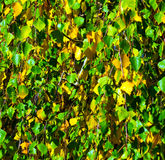 Background autumn Royalty Free Stock Photography