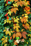 Background with autumn colorful leaves Stock Images