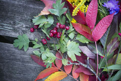Background - autumn colors Royalty Free Stock Photo