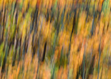 Background in autumn colours. Stock Image