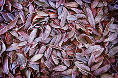 Background of autumn dead leaves Stock Images