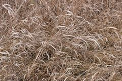 Background with autumn grass stock photo