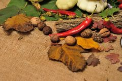 Background autumn harvest Stock Images
