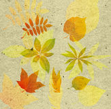 Background with autumn leaf Royalty Free Stock Image