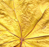 Background from autumn leaf Stock Photo