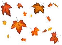 Background an autumn leaf fall Royalty Free Stock Photos