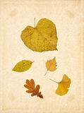 Background autumn leave paper Royalty Free Stock Photos