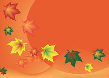 Background with autumn leaves. Red background with flying maple leaf vector illustration