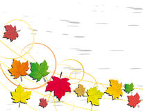 A background with autumn leaves. Abstract background with autumn leaves Stock Photo
