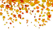 Background of autumn leaves. Stock Photography
