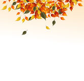 Background of autumn leaves. Stock Image