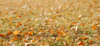 Background with autumn leaves stock image