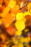 Background of autumn leaves. Royalty Free Stock Images