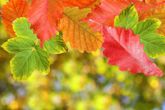 Background of autumn leaves Royalty Free Stock Photo