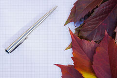 Background from the autumn leaves Royalty Free Stock Images
