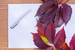 Background from the autumn leaves Royalty Free Stock Photo