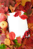 Background from autumn leaves Royalty Free Stock Images