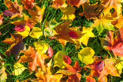 Background from autumn leaves Stock Photography