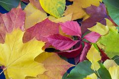 background of autumn leaves. Autumn fbstract background royalty free stock image