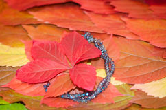 Background of autumn leaves, a carpet of leaves. Background of autumn leaves, colorful leaves, blue necklace Royalty Free Stock Photo