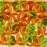 Background from autumn leaves of chestnut tree Stock Photo