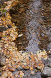 Background. Autumn leaves. Royalty Free Stock Photos