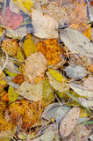 Background. Autumn leaves. Stock Photo