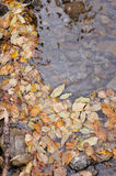 Background. Autumn leaves. Royalty Free Stock Images